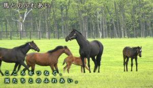 ins-horse-01